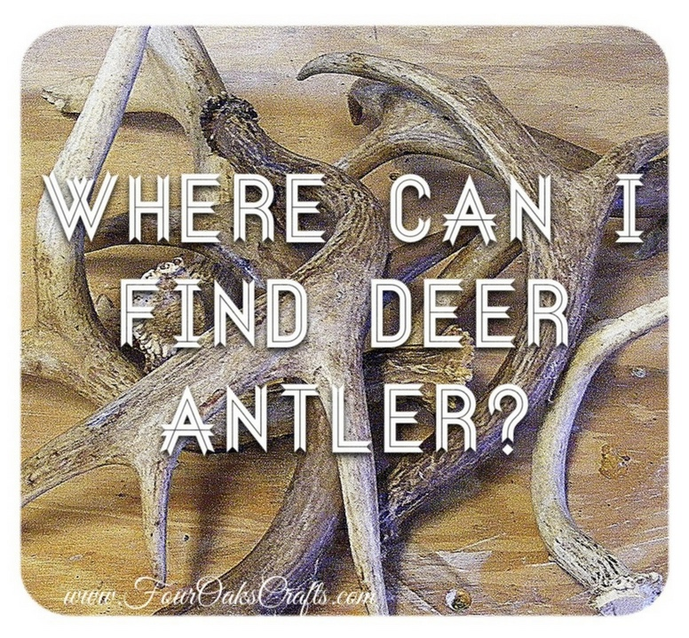 where can I find deer antler